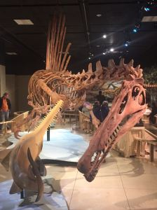 Spinosaurus reconstruction at National Geographic Museum