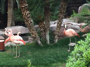 Pink flamingos at the Flamingo Las Vegas wildlife exhibit
