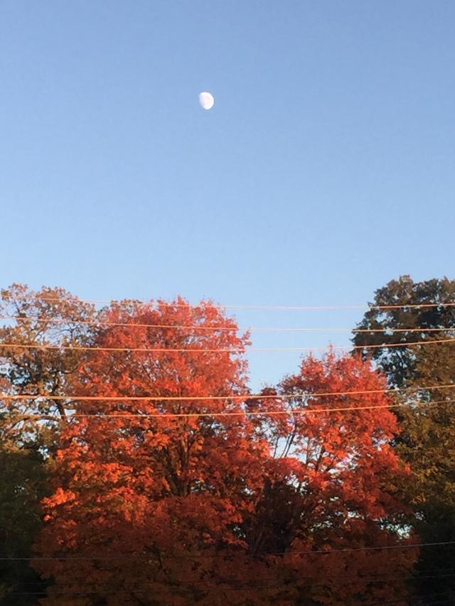 Rising moon above orange autumn trees