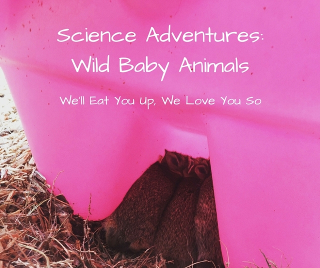 "Text: ""Science Adventures: Wild Baby Animals; We'll Eat You Up, We Love You So."" Photo of three baby bunnies huddled under a bright pink playground slide."