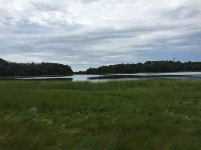 Photo of green marsh grass in foreground, pond with trees behind it in background, with a sky covered in white clouds