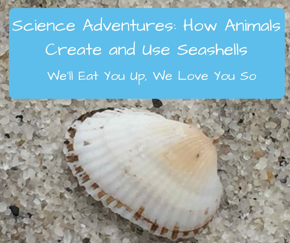 "Text: ""Science Adventures: How Animals Create and Use Seashells"" Photo of half of a ribbed, white seashell on white sand in Cape Cod."
