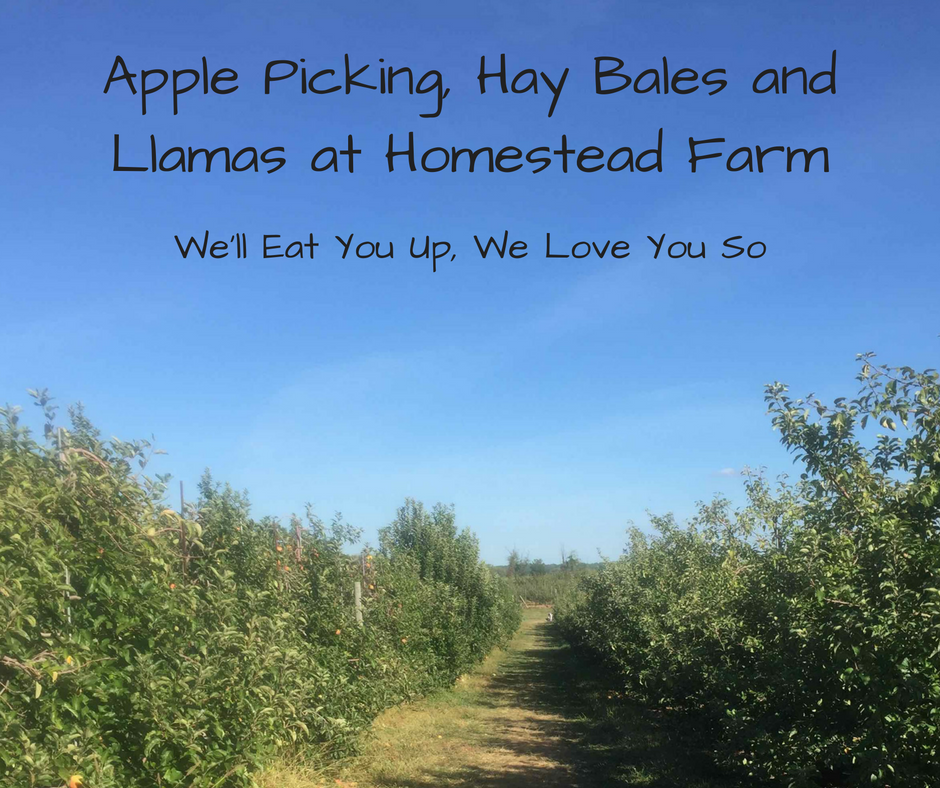 "Photo: Rows of apple trees at Homestead Farm; text: ""Apple Picking, Hay Bales, and Llamas at Homestead Farm; We'll Eat You Up, We Love You So"""