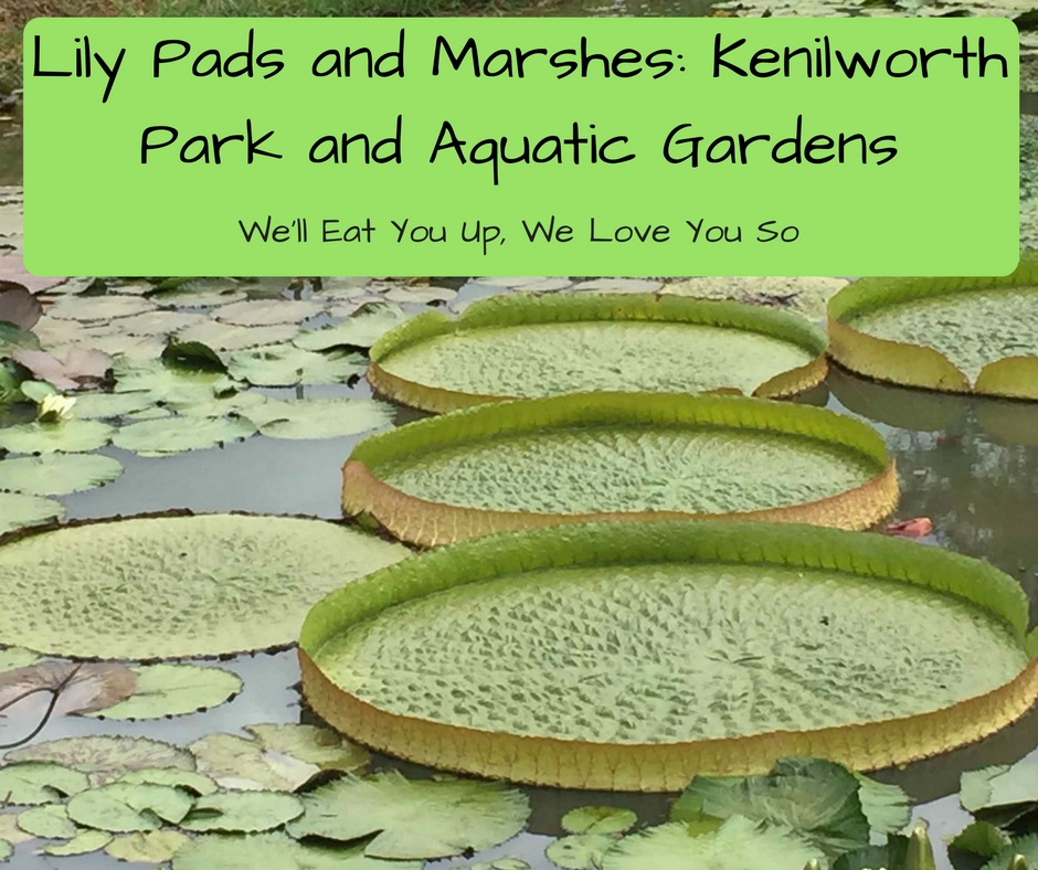 "Photo of large lily pads in a pond; text: ""Lily Pads and Marshes: Kenilworth Park and Aquatic Gardens"""
