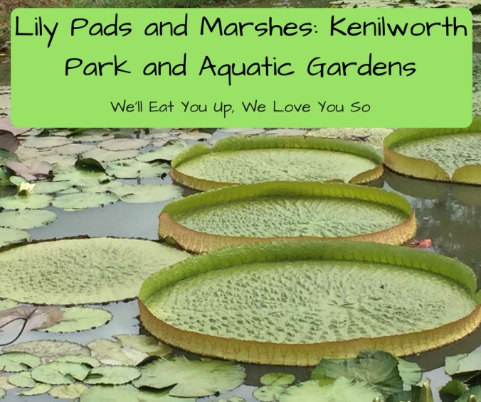 """Photo of large lily pads in a pond; text: """"Lily Pads and Marshes: Kenilworth Park and Aquatic Gardens"""""""