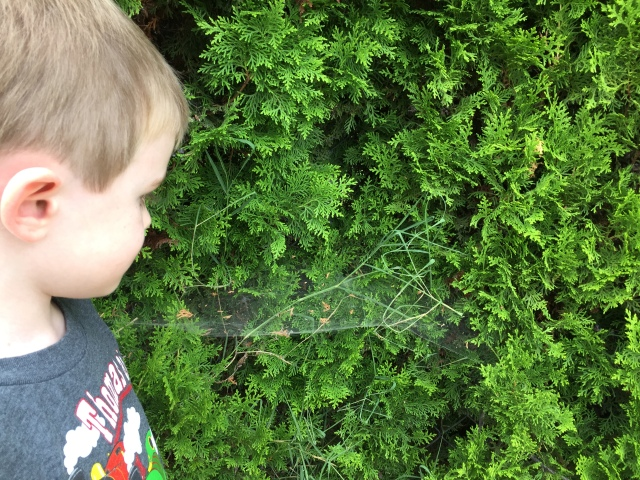 spiderweb-on-bush