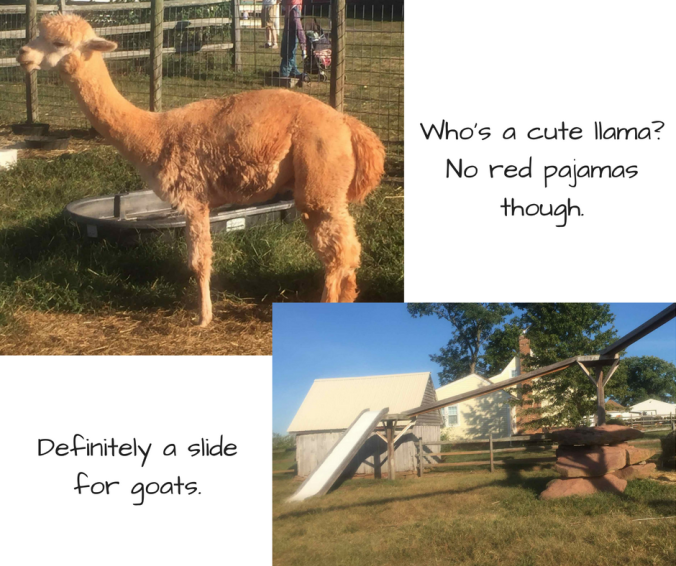 Photo on top: Llama in a pen at Homestead Farm. Caption: Who's a cute llama? No red pajamas though. Lower photo: Several aerial platforms connected by bridges and ending in a slide. Caption: Definitely a slide for goats.