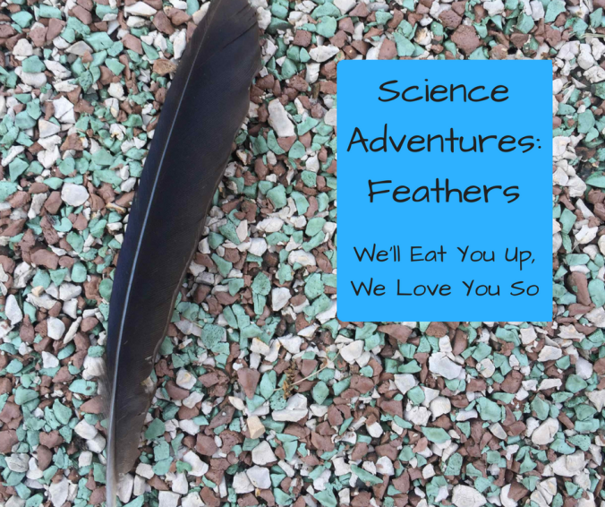 "Photo: Black feather on multi-colored gravel. Text: ""Science Adventures: Feathers; We'll Eat You Up, We Love You So"""