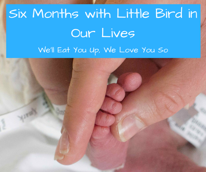 six-months-with-little-bird-in-our-lives