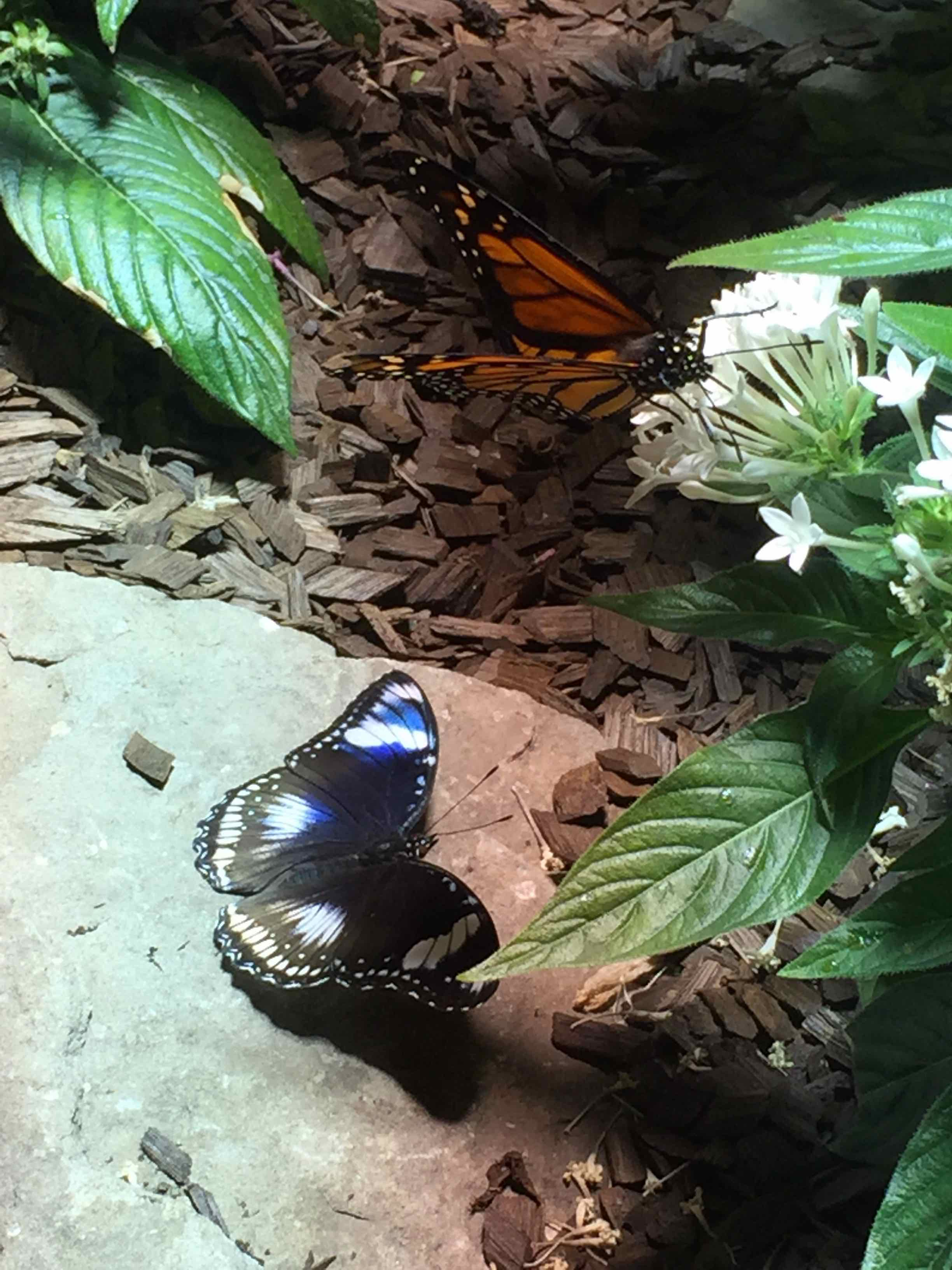 Butterflies at the Smithsonian Natural History museum