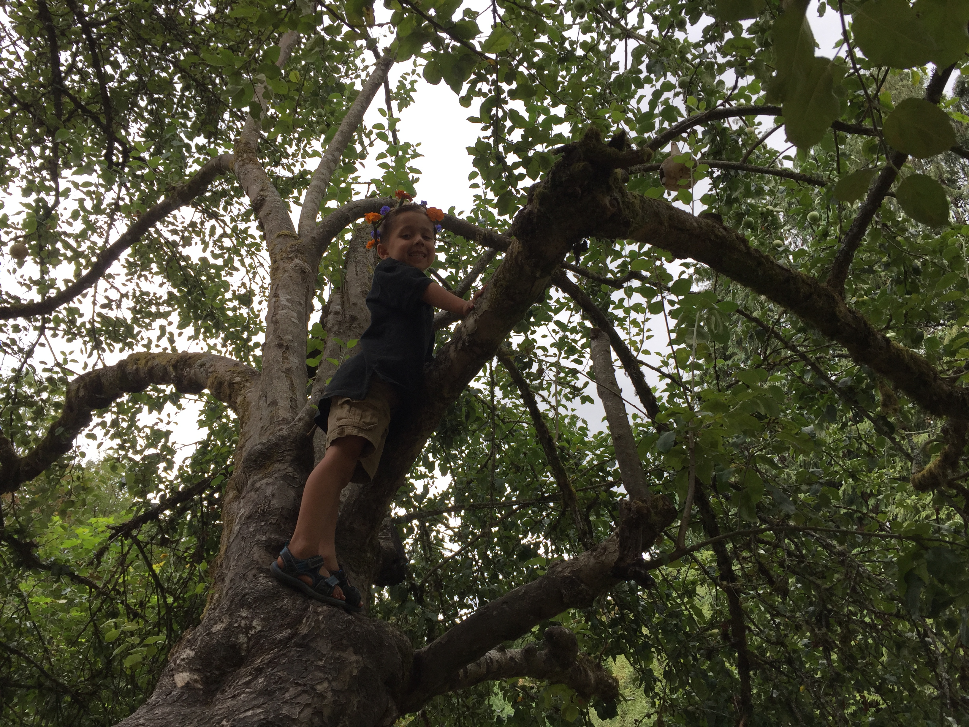 Photo: Young boy in flower crown climbing a tree
