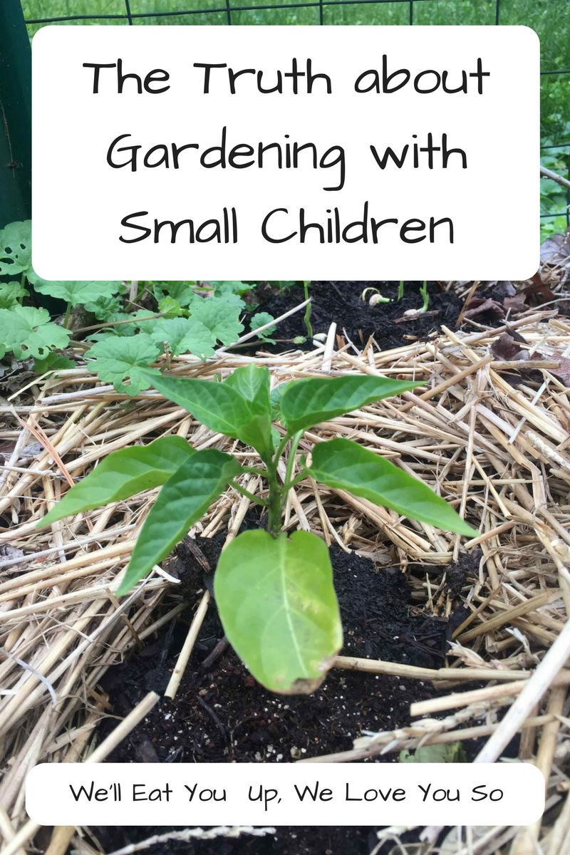 The Truth about Gardening with Kids - yes, all of these things will happen! (Photo: Pepper plant in garden surrounded by straw)