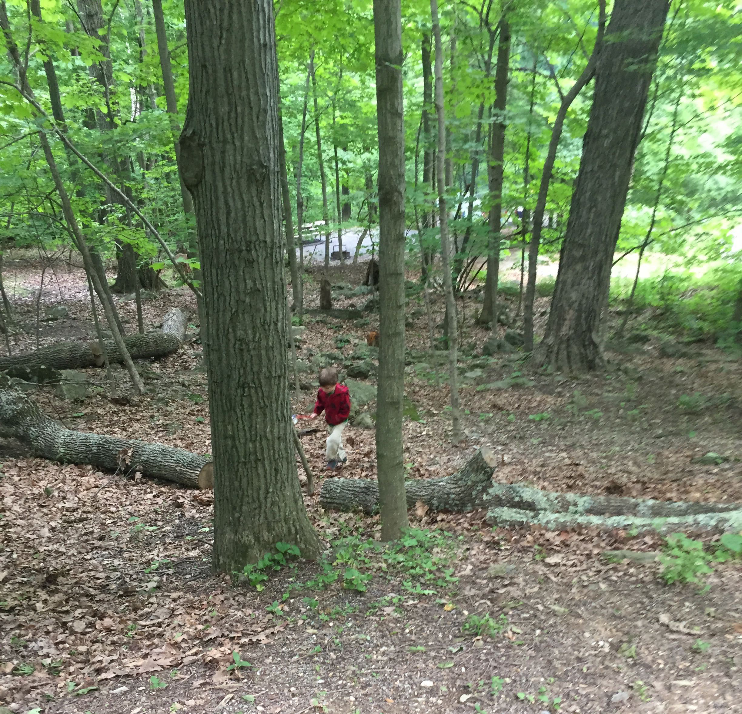 Photo of a child in a red jacket walking up through the forest